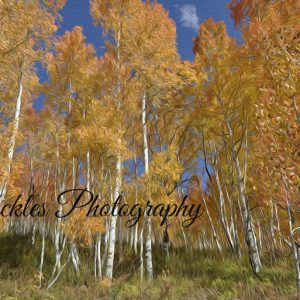 Autumn Aspen art print