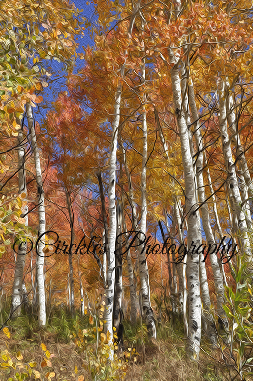 Red Aspens Vertical Art Print #3 of Triptych