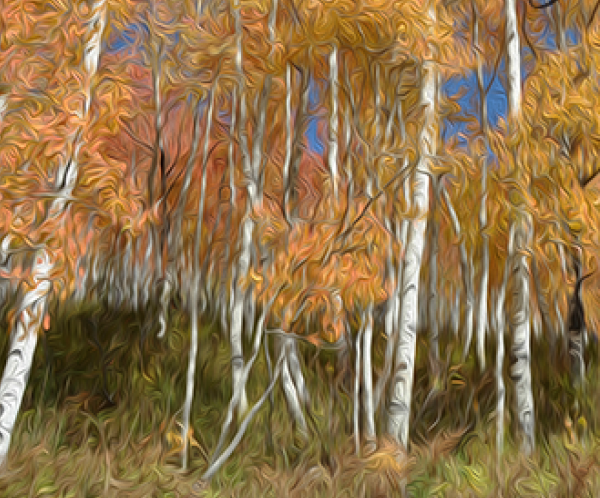 Autumn Aspen art print for sale