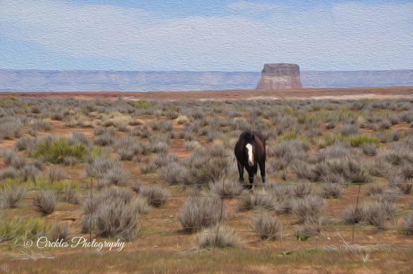 Lone Horse in Desert art print