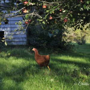 Chicken and apple tree art print